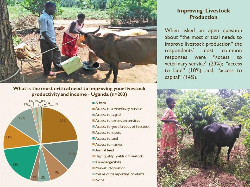 improving-livestock-production